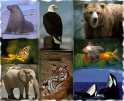 Course Image ZLY101 - INTRODUCTORY ZOOLOGY I